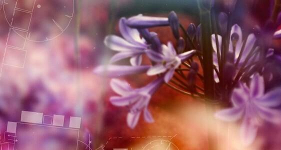 hampton court flower festival teaser