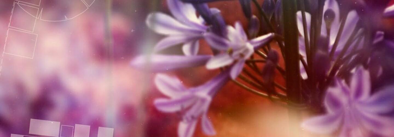 purple flower close up banner