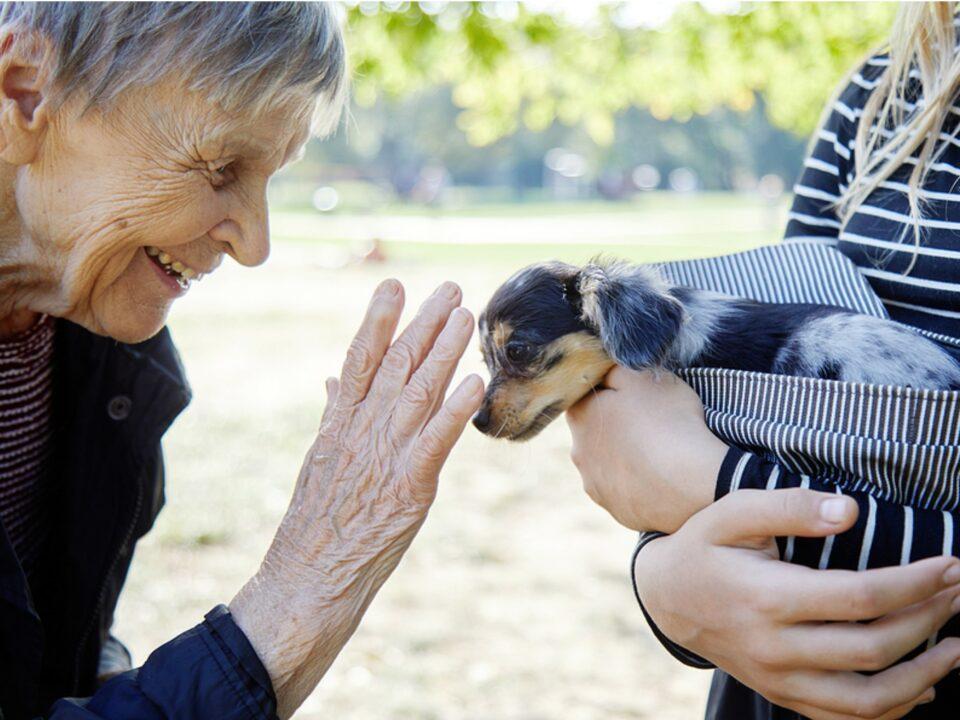 Senior woman petting a dog