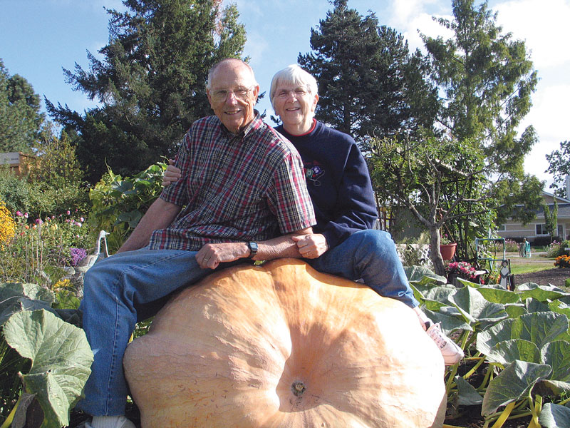 A senior couple sit atop a giant pumpkin that was grown in their backyard