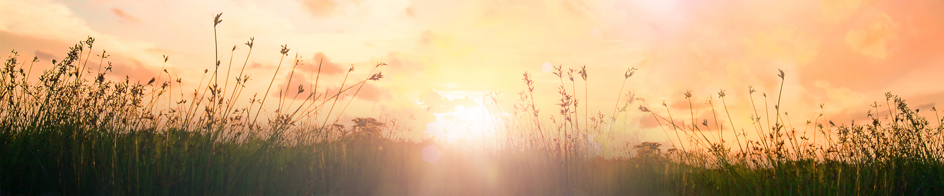 sunset over wild prairie grass