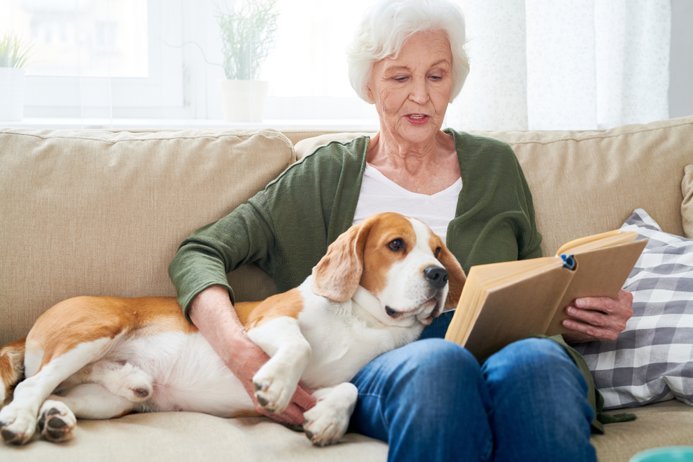 A beagle rests on the couch next to a senior woman reading a book