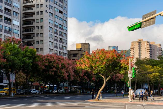 你的城市適合哪一種原生樹?林務局公布106種台灣原生植物指南