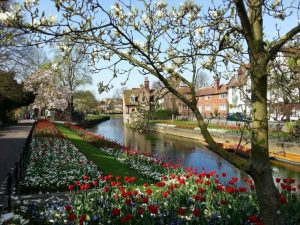 Canterbury in bloom! (1)