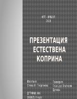 Презентация Коприна