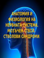 Анатомия и физиология на нервната система Мозъчен ствол Стволови синдроми