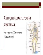 Скелет на човека