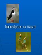 Многообразие на птиците