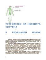 Нервна система и гръбначен мозък Устройство