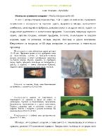 Семейство Огневки - Pyralidae