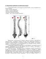 Методика на кинезитерапия при гръбначни изкривявания