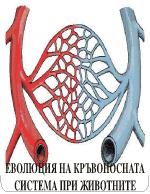 Еволюция на кръвоносната система