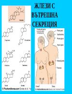 Жлези с вътрешна секреция