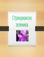 Странжанска зеленика