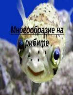 Многообразие на рибите