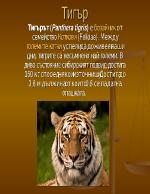 Тигър - видове и разпространение
