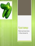 Краставици - същност и особености