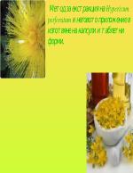 Екстракция на жълт кантарион
