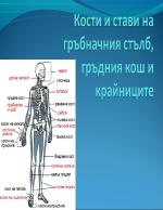 Кости и стави