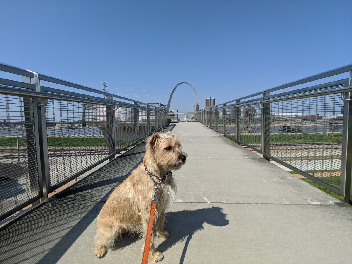 Road trip with my dog. At the St. Louis Arch