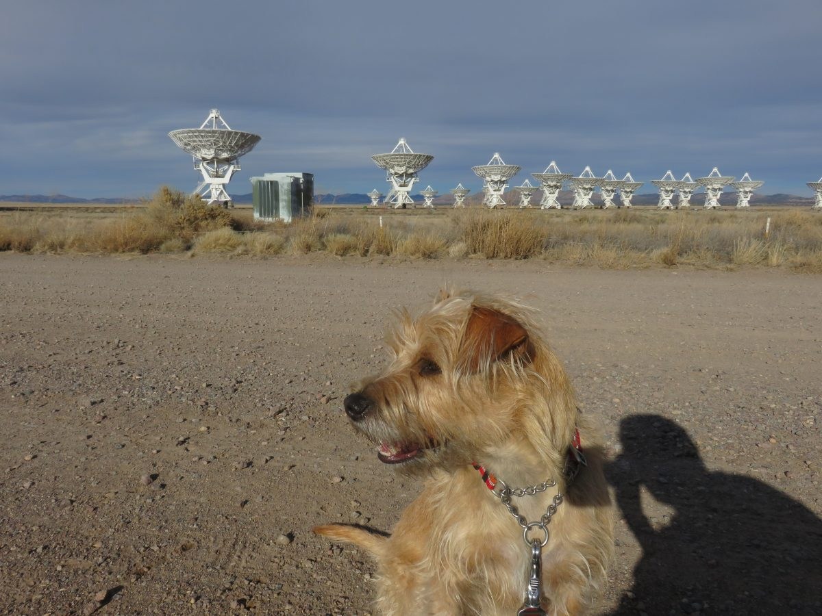 Road trip with my dog. At Very Large Array