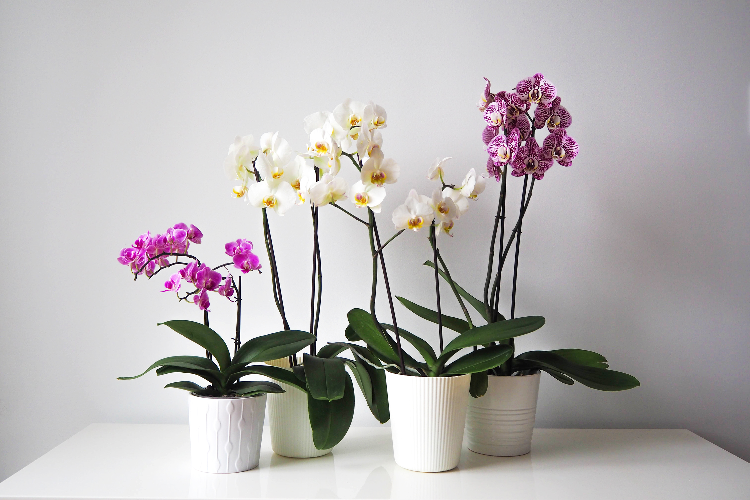How To Repot An Orchid Apartment Therapy