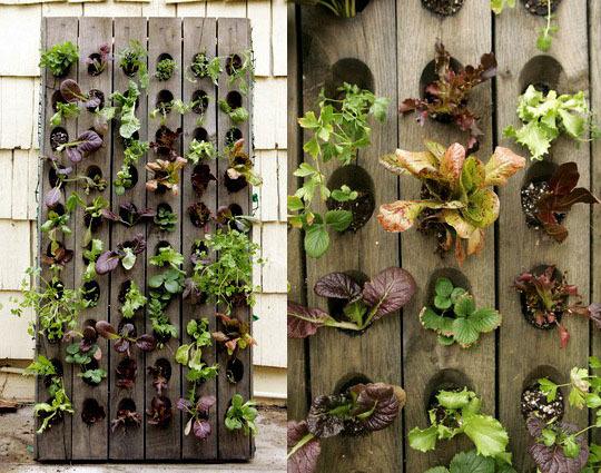 9 Patio Garden Ideas How To Grow Plants On A Small Patio