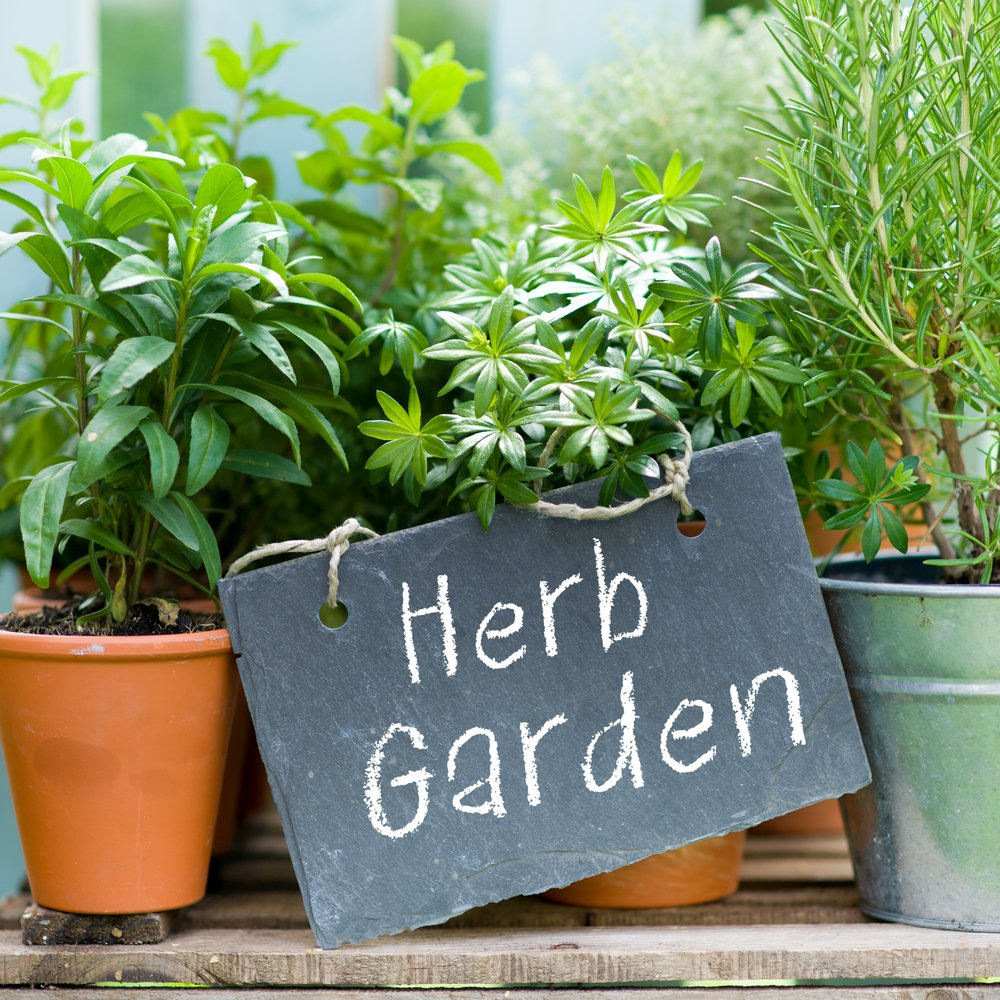 What Herbs Should I Plant in My Garden? Eight Useful Ones to Grow