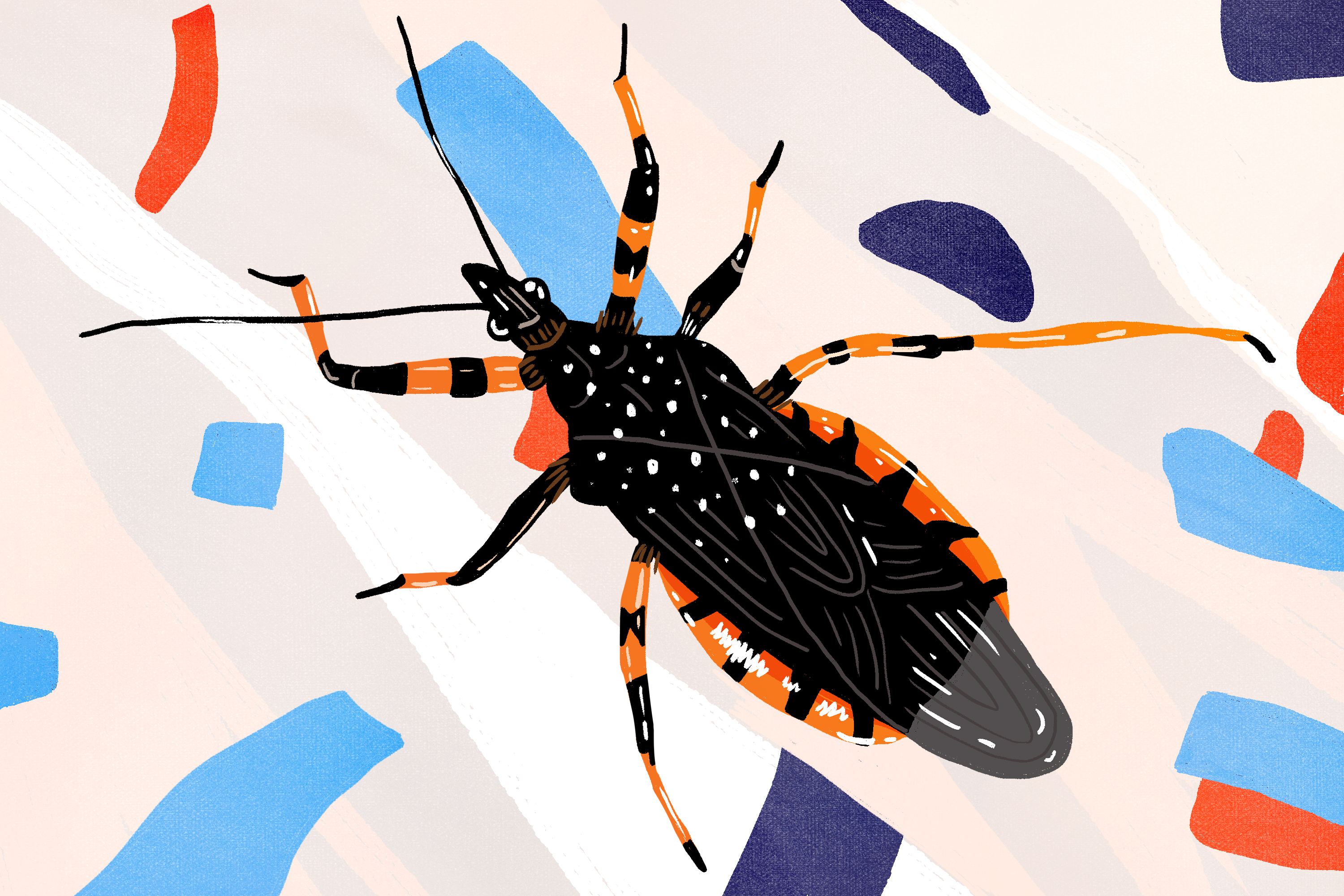 Everything to Know About Assassin or Kissing Bugs | Apartment Therapy