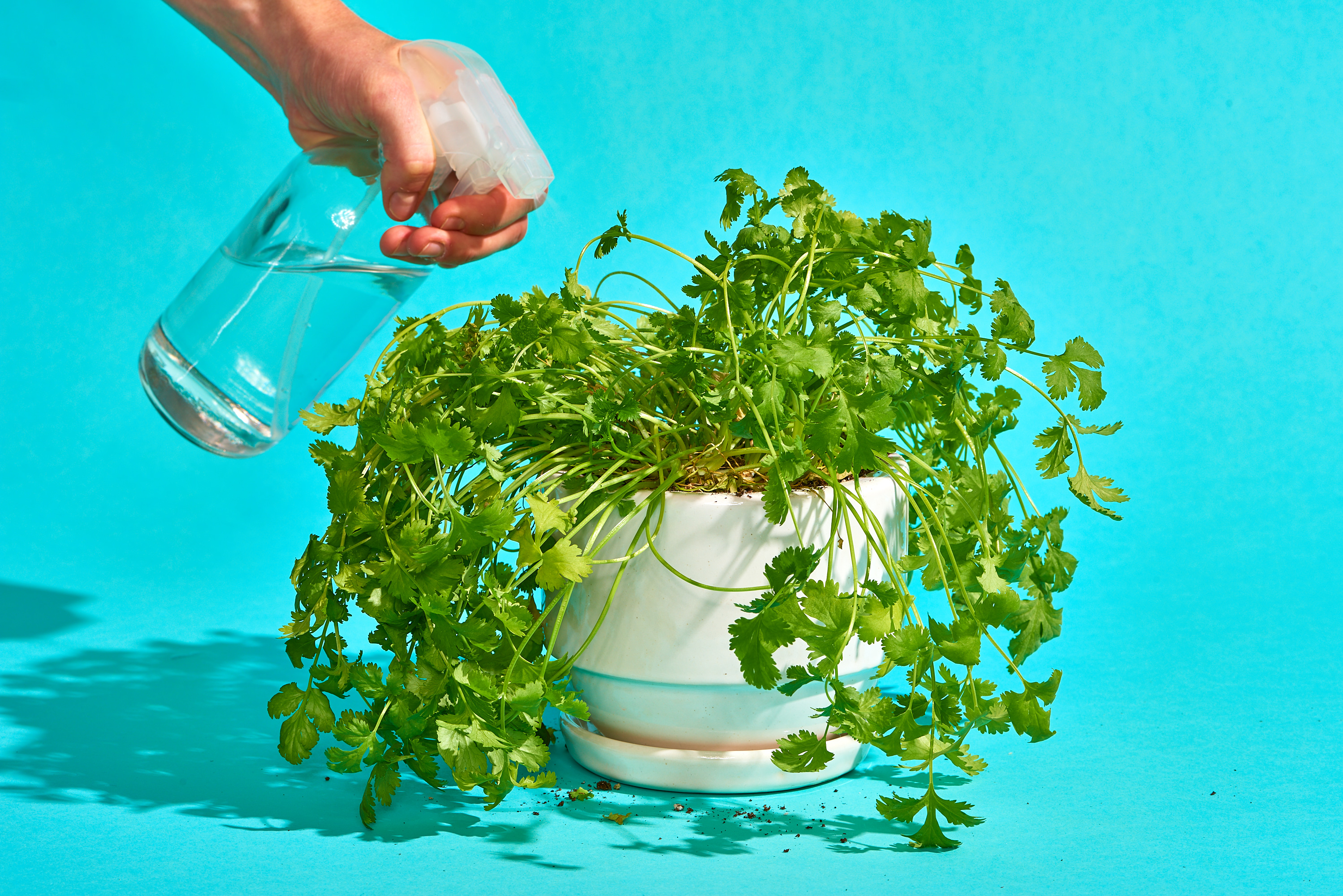 Transfer Your Plant into Container