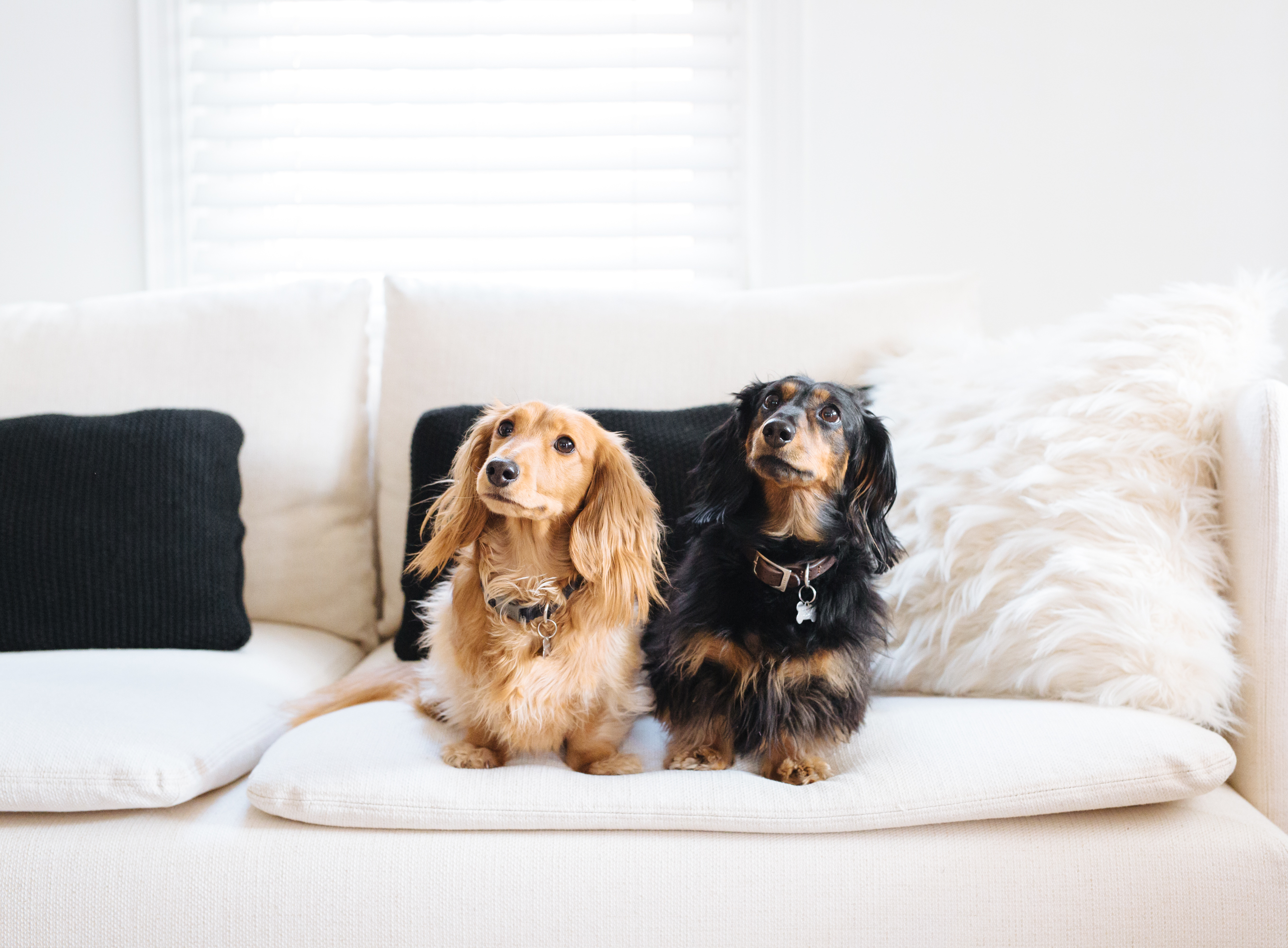 Best Upholstery Fabric Options For Cat Dog Owners