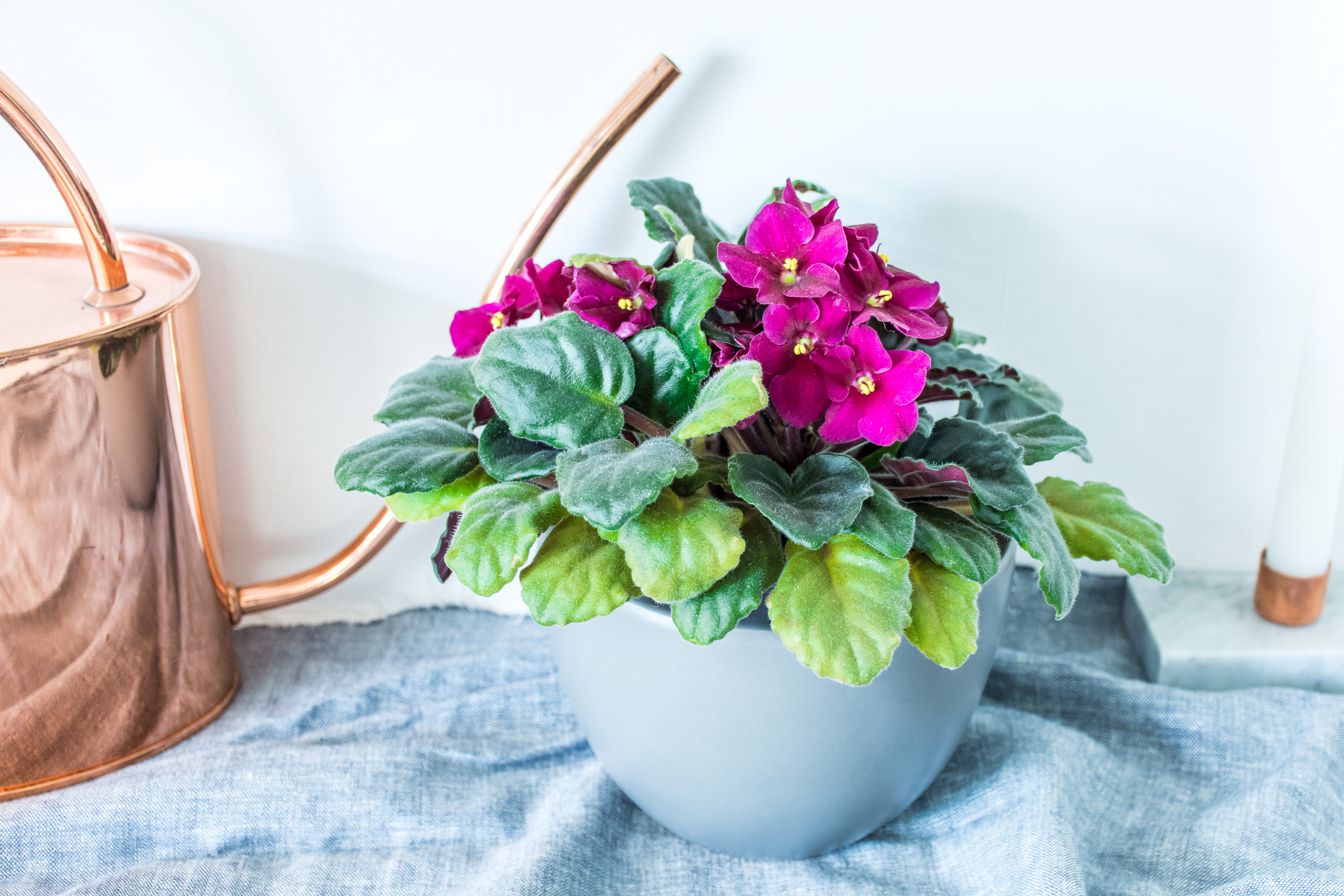 The Adaptable Colorful Houseplant That Can Bloom All Year Round