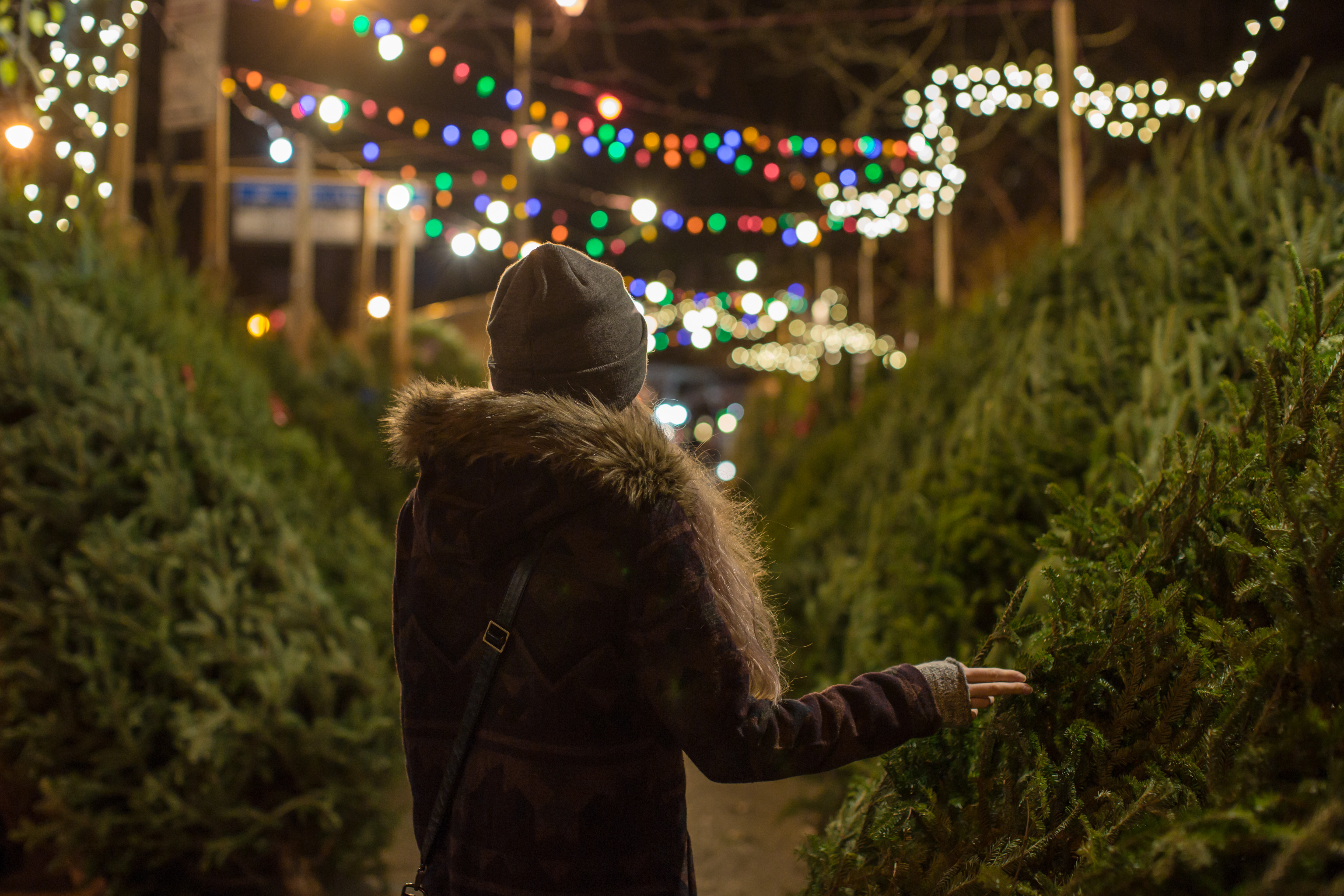 Bugs In Christmas Trees.Here S Exactly How Many Bugs Are In Your Real Christmas Tree
