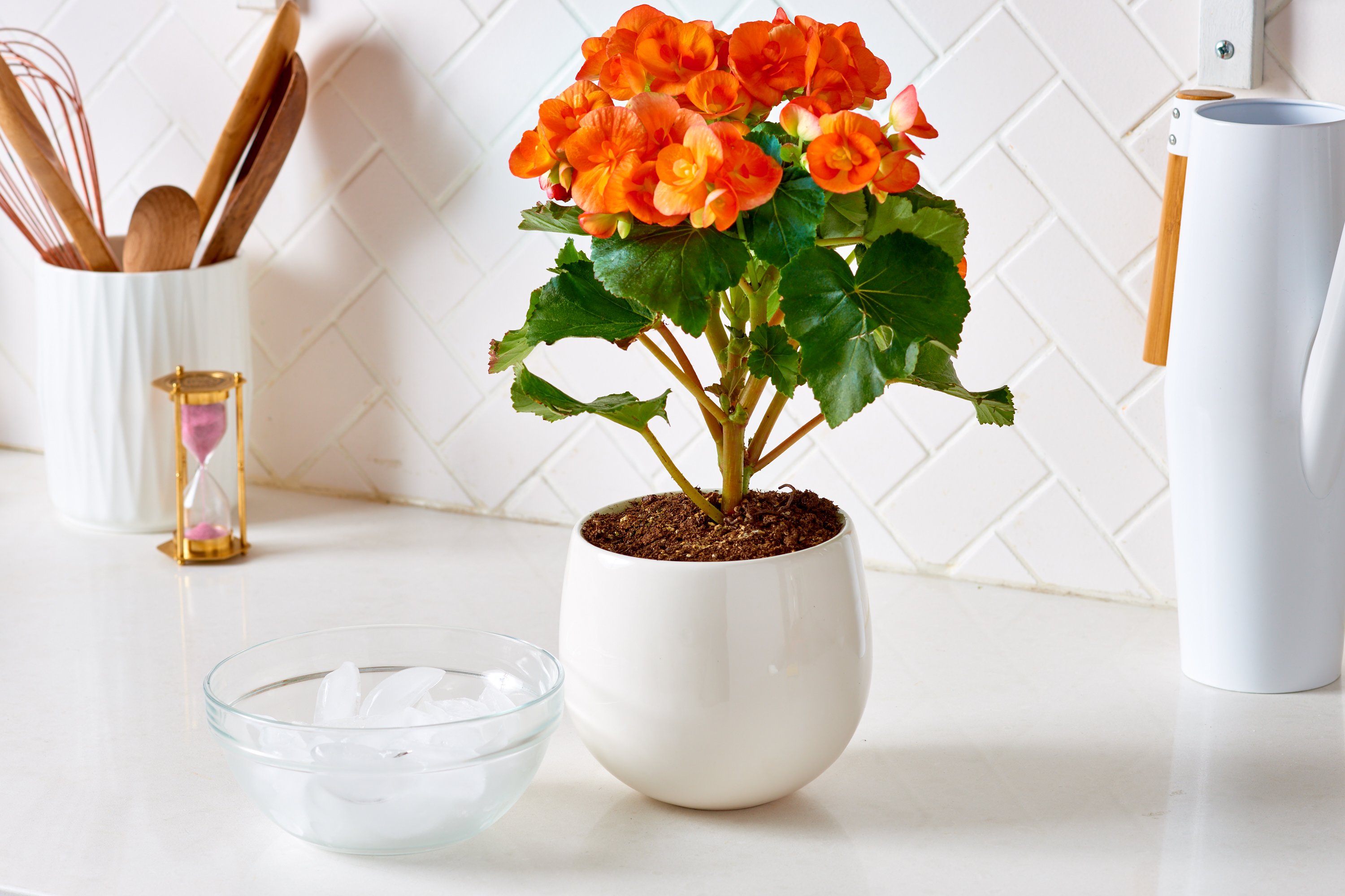 Ice Cube Orchid Watering Plants Apartment Therapy