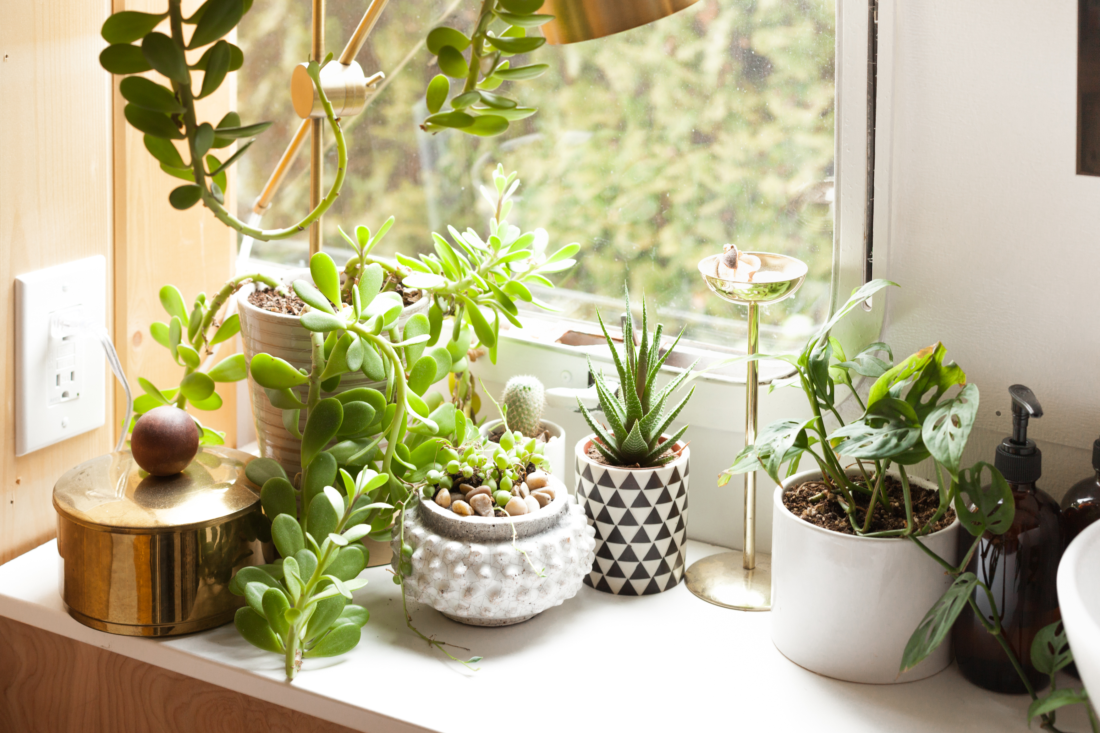 Budget-Friendly Sources for Buying Plants Online | Apartment