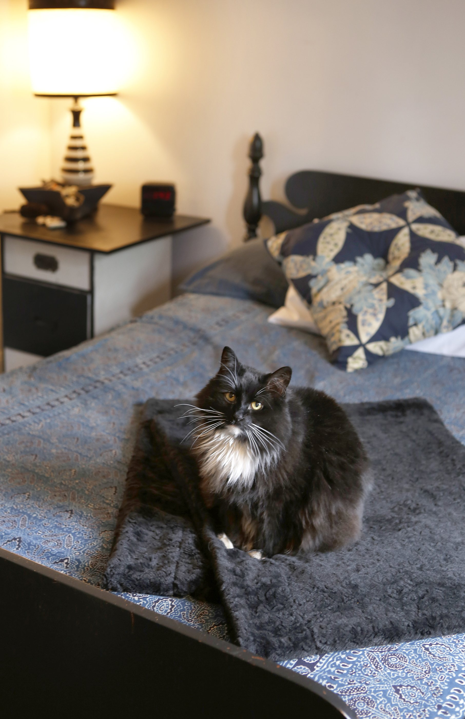 how to stylishly cat-proof your home | apartment therapy