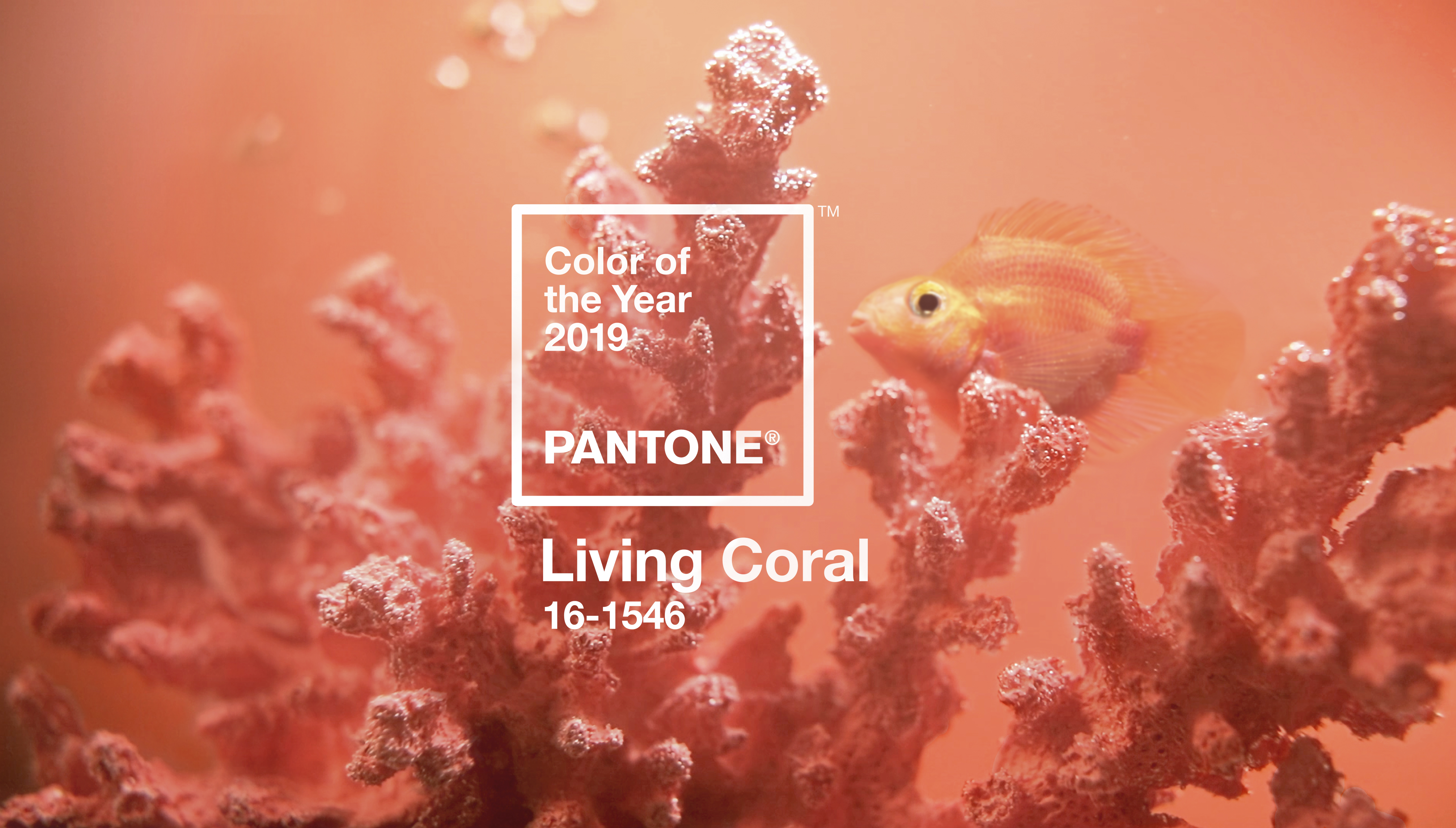 Pantone Color Of The Year 2019 Designer Opinions Tips Apartment