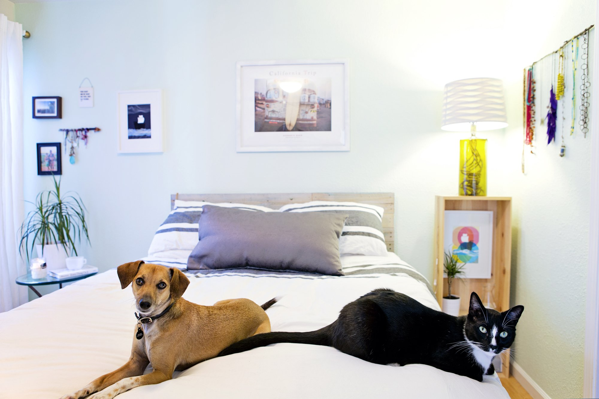 534e7df67f2e How to Keep Your Home Looking Stylish With Pets | Apartment Therapy