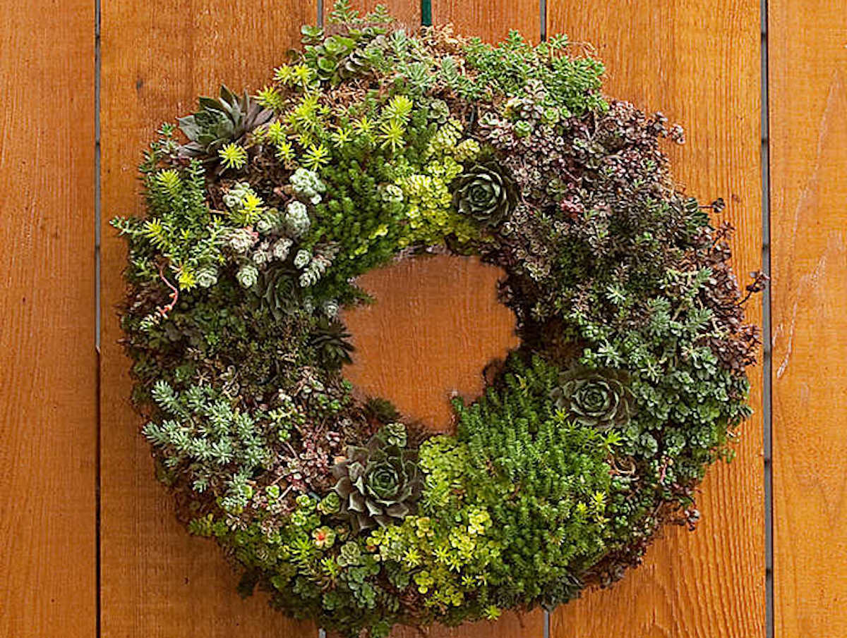 Take Your Love of Succulents to the Next Level With This Costco Wreath