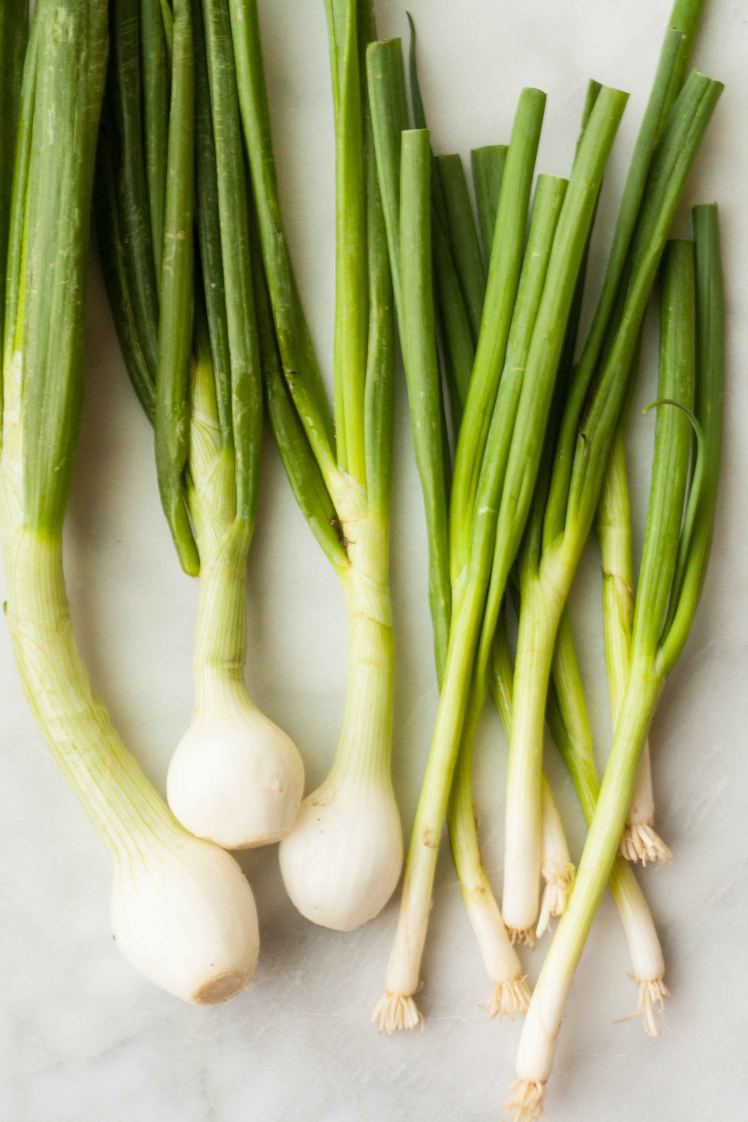 Difference Between Scallions and Green & Spring Onions   Kitchn
