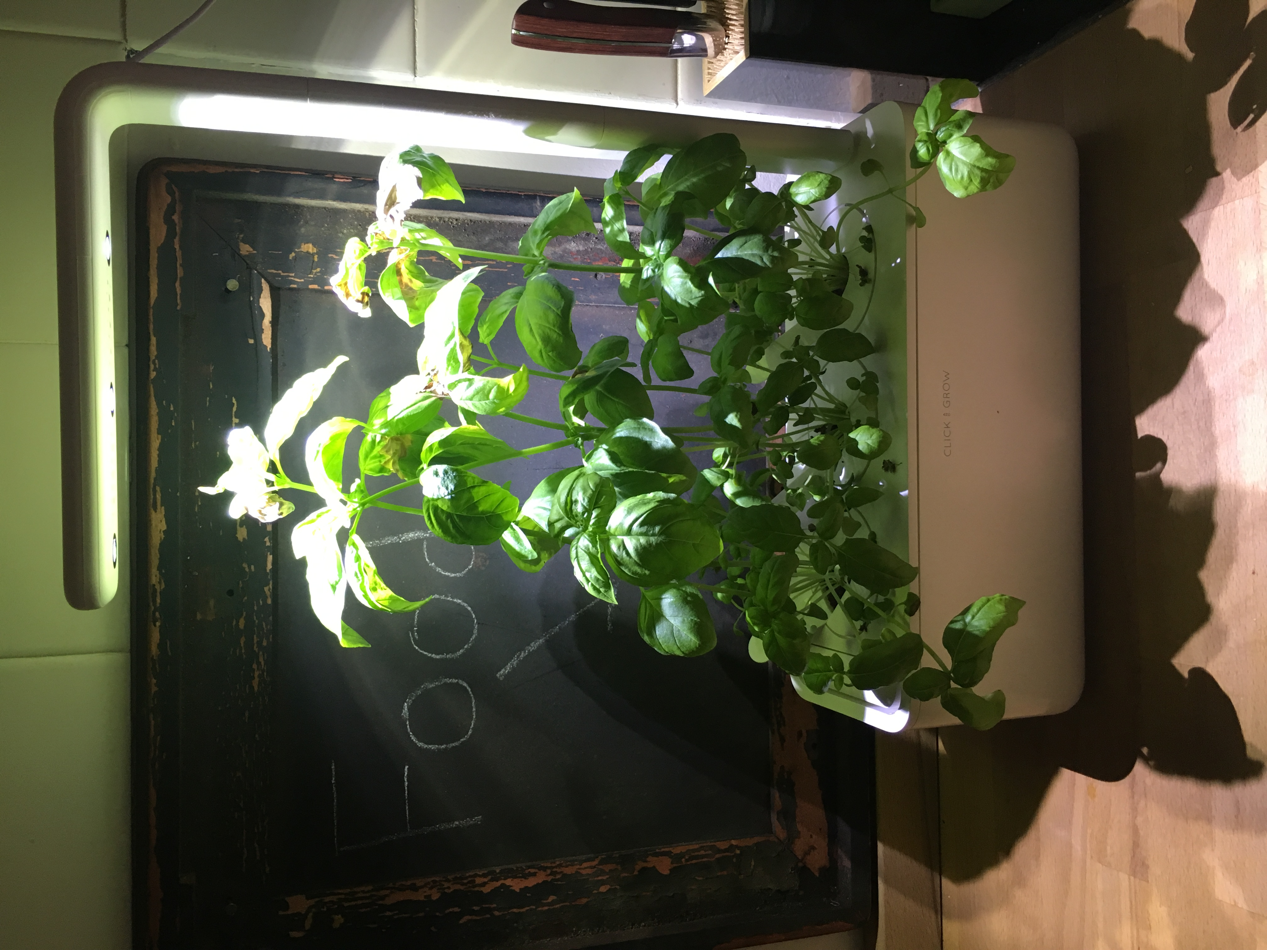 Does the Click and Grow Garden System Actually Work? | Kitchn