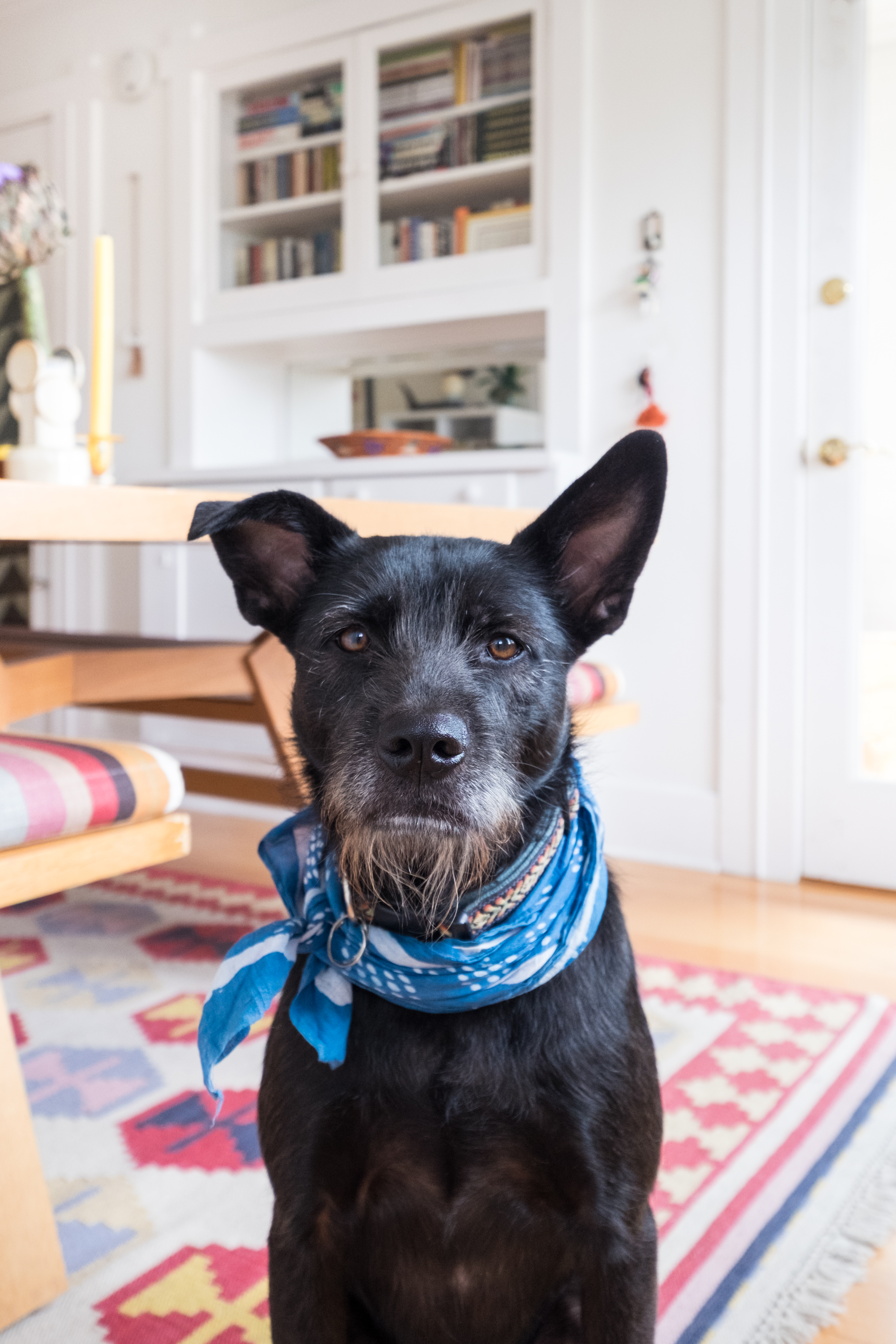 Dog Meal Delivery - Ollie, PetPlate, The Farmer's Dog | Kitchn