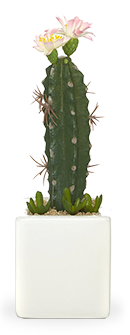 Browse our range of cactus accessories for the bedroom