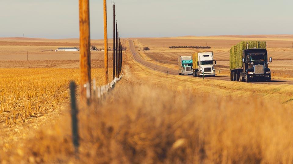Truck-fleet-field