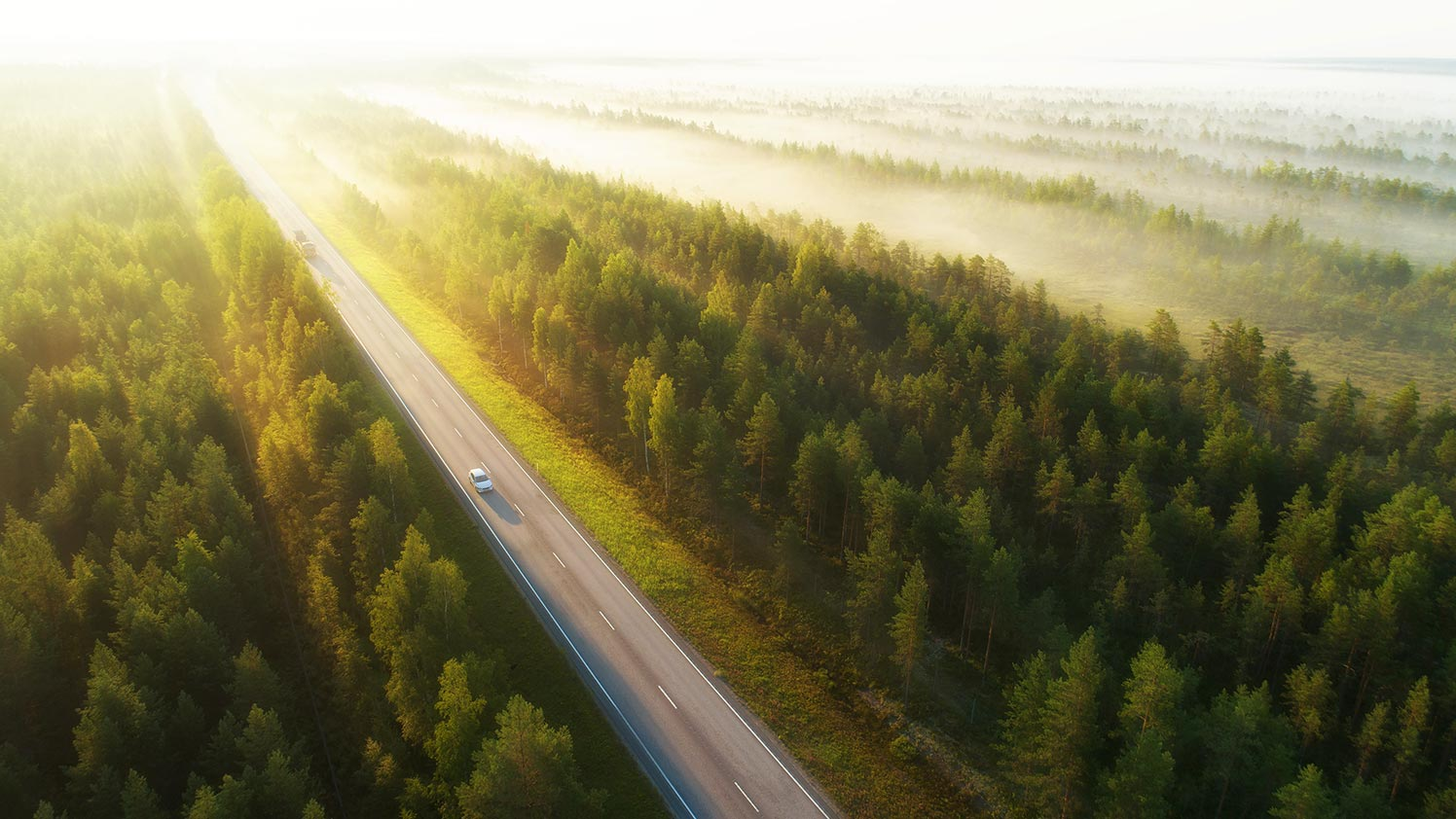 A highway road through green forest sustainability