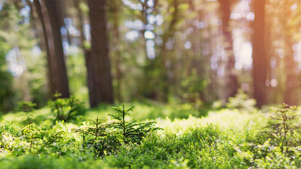 Forêt avec soleil en arrière-plan