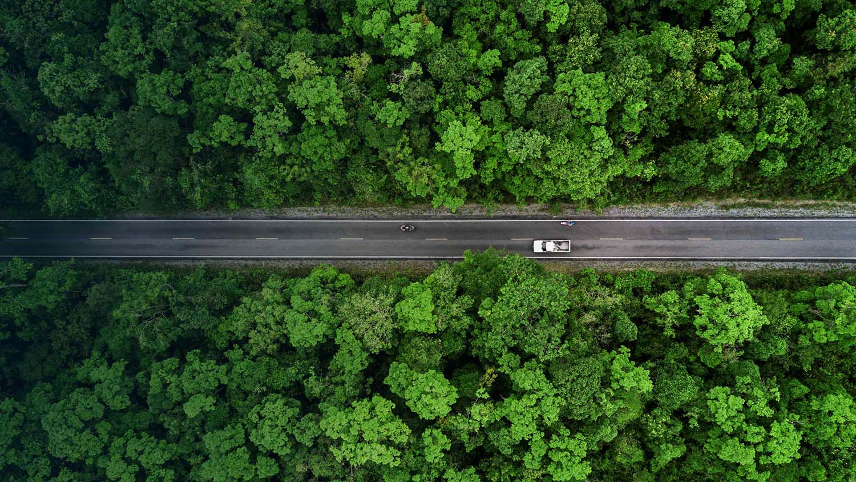 Auto fährt durch einen Wald