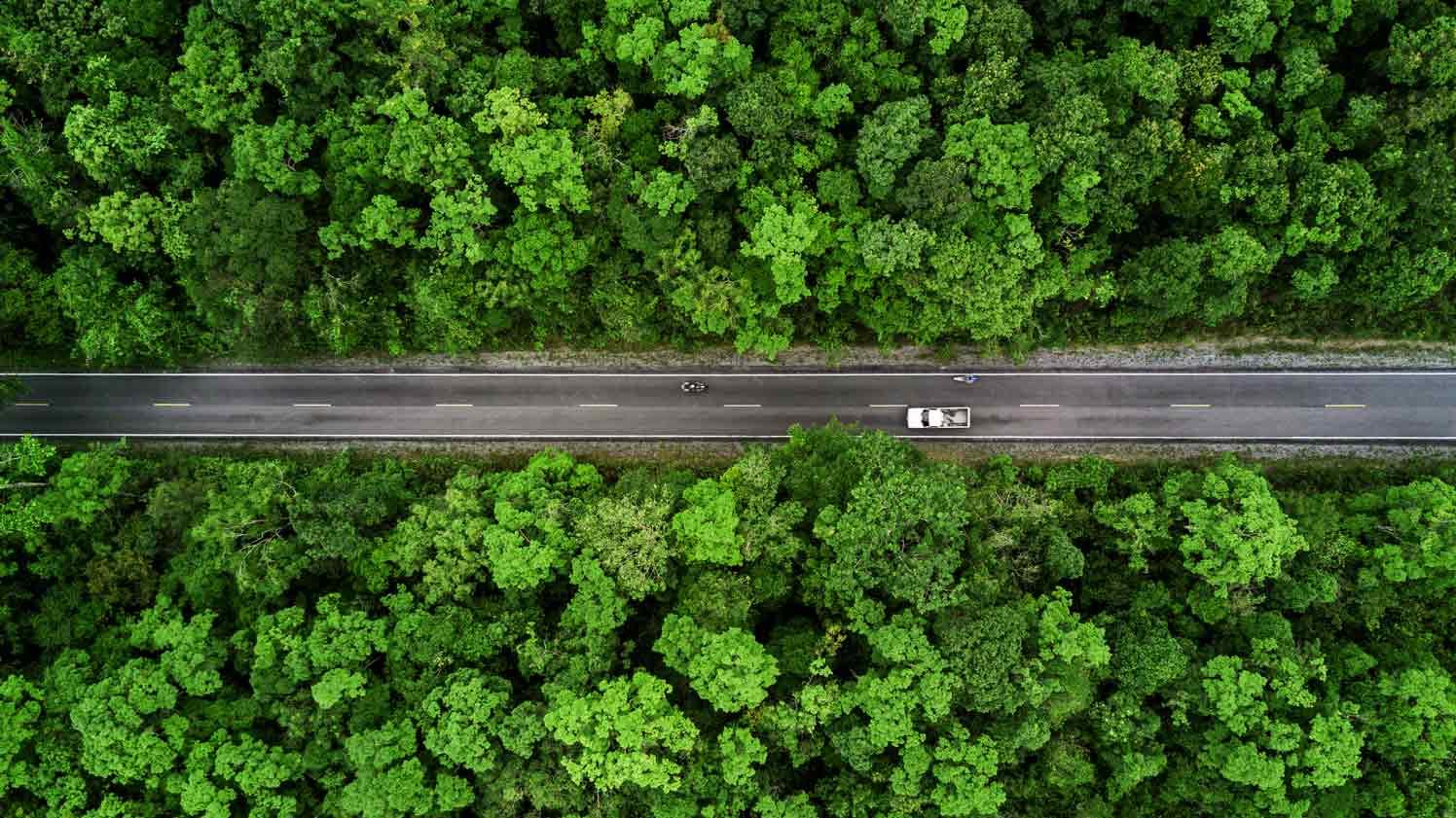 Voiture roulant à travers une forêt
