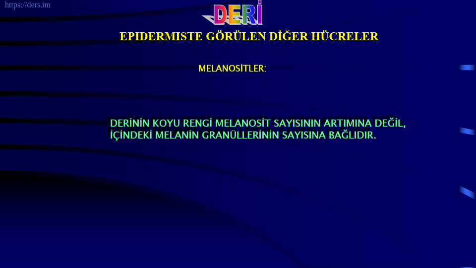 SOMATOLOJİ DERS NOTLARI - 3