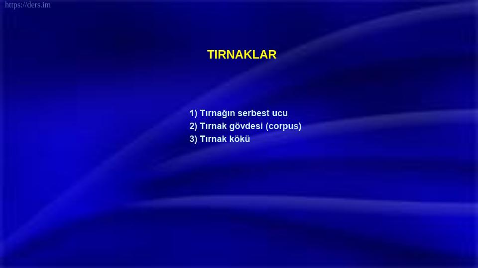 SOMATOLOJİ DERS NOTLARI - 7
